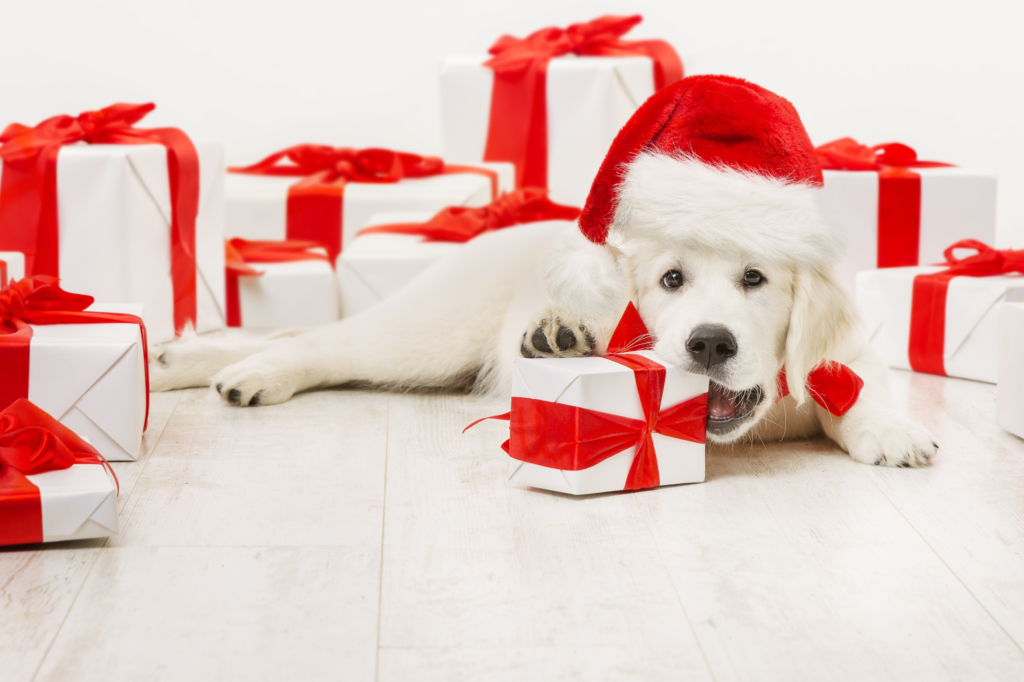 4 Gifts Your Dog Will Love For Christmas Love My Puppy